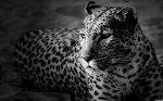 Les petits chats, les chiens, les perroquets, safari, jungle, les singles, le rat ou les petites souris?