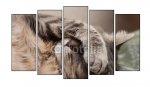 Des tableaux animaux: trouver le meilleur image